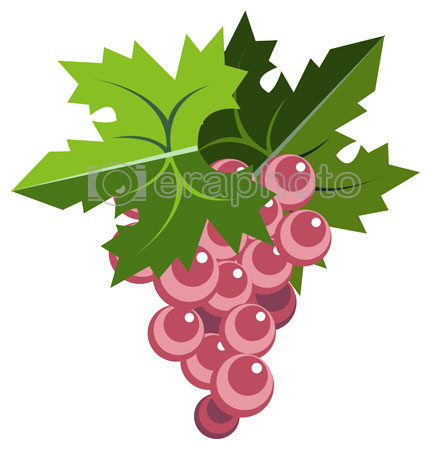#2000061 - Pink grape bunch with leaves