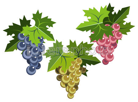 #2000062 - Grape bunches with leaves