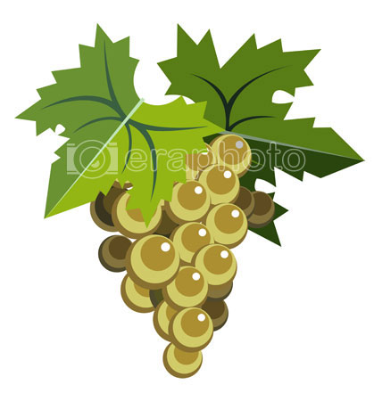 #2000064 - White grapes with leaves