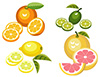 #2000036 - Citrus fruits