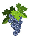 #2000065 - Black grapes with leaves